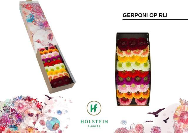 Germini gerponi mix in row